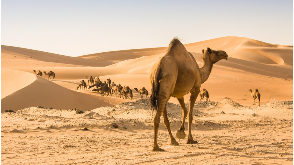 沙子,環境,地球,氣候