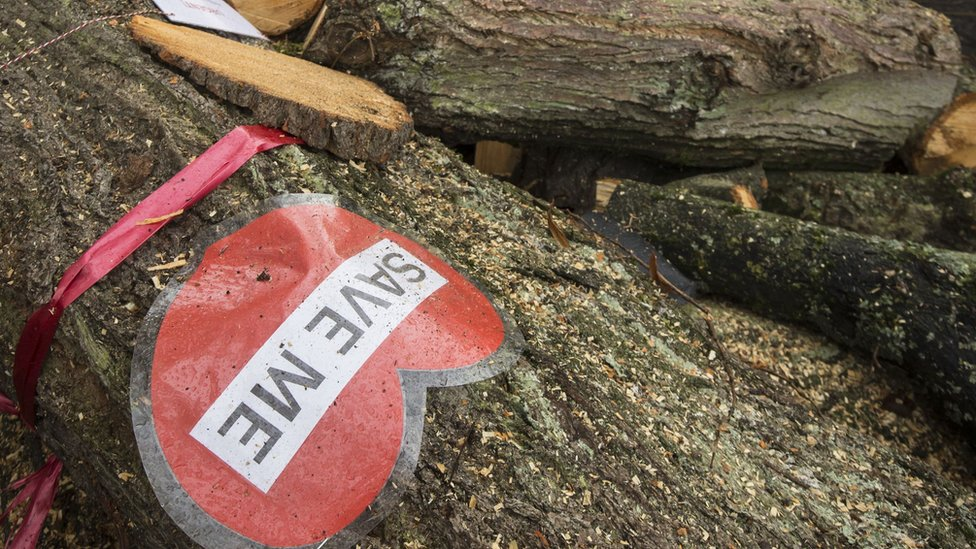 A sign on tree cut down by contractors in Rustlings Road, Sheffield