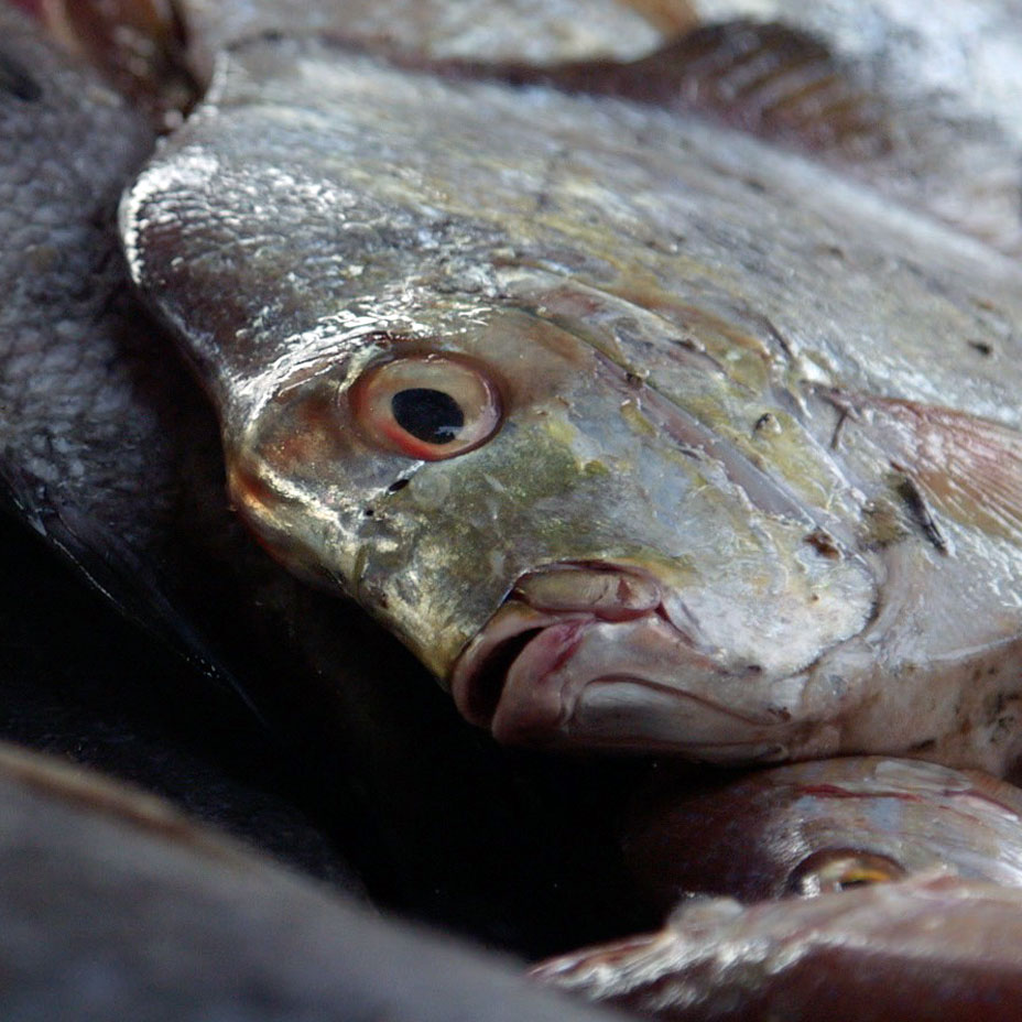 The fight for Africa's fish