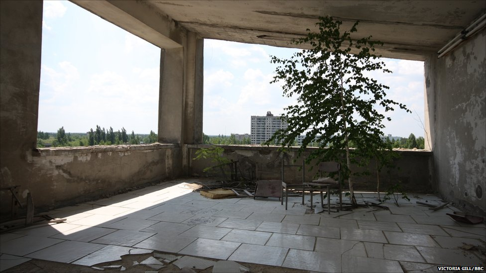 A tree growing on the top floor of an abandoned apartment block in Pripyat, in the Chernobyl exclusion zone (c) Victoria Gill