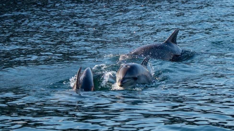 Three types of dolphins including bluenose can be found in the Bosphorus, Istanbul