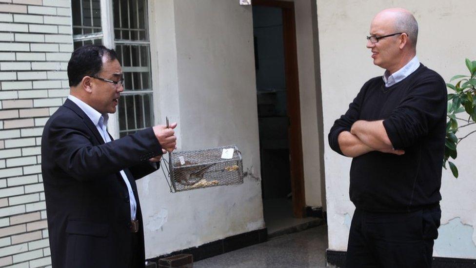 Профессор Чжан и профессор Холмс исследуют крысу в ловушке во время исследовательской поездки по инфекционным заболеваниям в Китай в 2013 году.