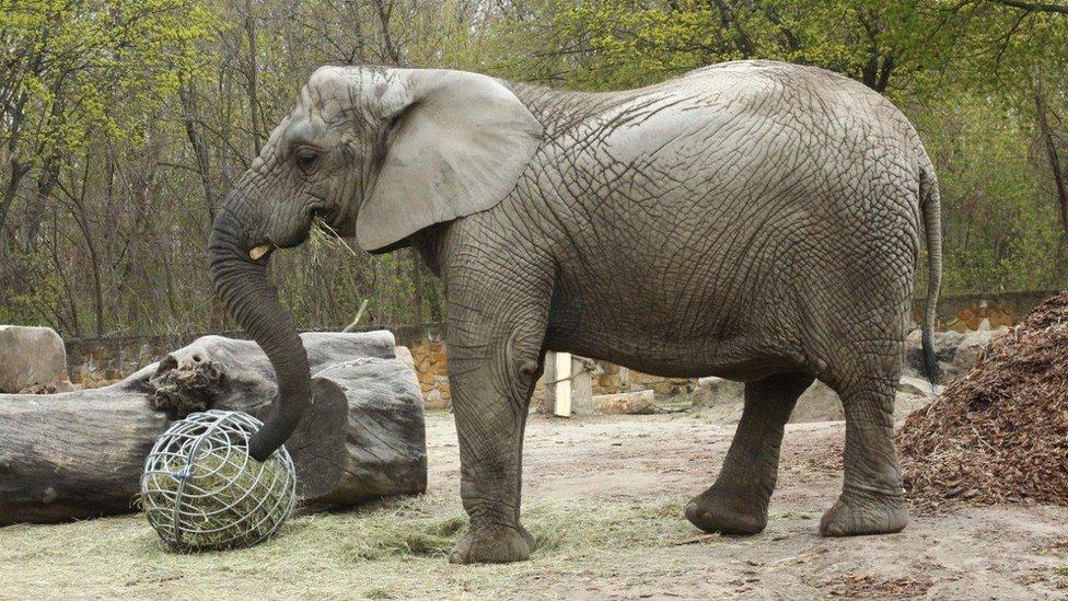 Fređa je izabrana za prvu životinju u zoološkom vrtu koja je dobila ulje industrijske konoplje.