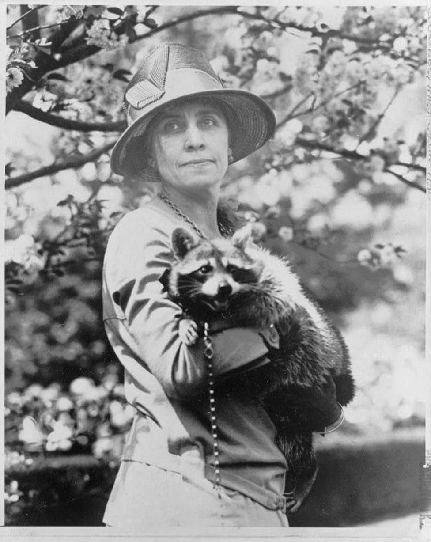 السيدة الأولى غريس كوليدج، زوجة الرئيس كالفن كوليدج، تحمل حيوان الراكون.