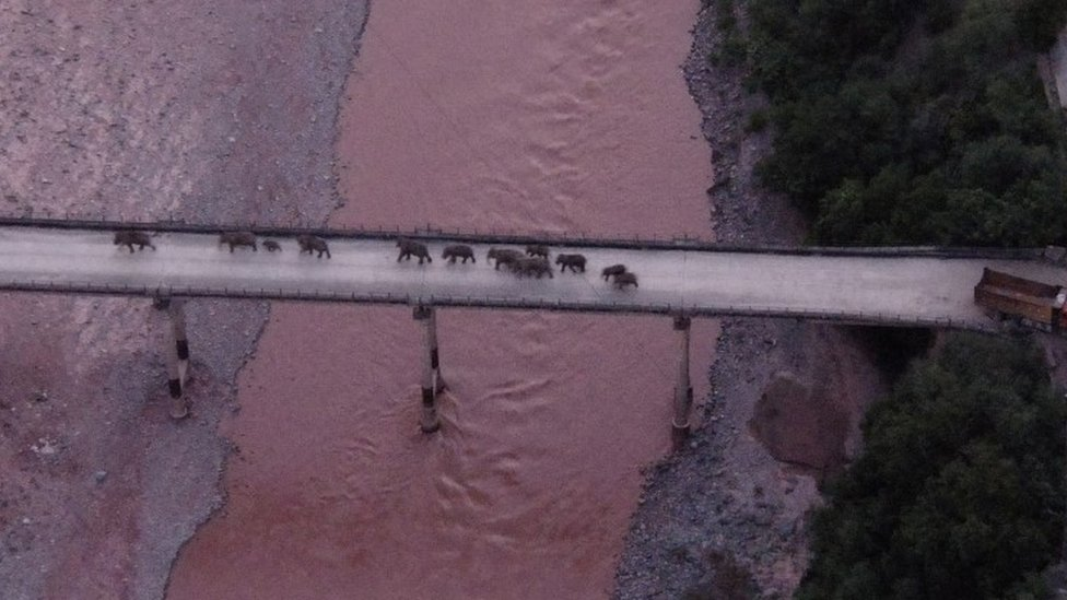 El domingo se vio a los elefantes cruzando el rio Yuanjiang en la provincia de Yunnan.