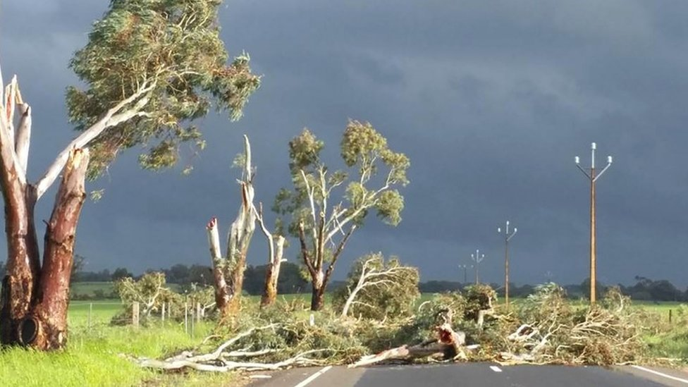 A photo taken on September 28 and obtained on September 29, 2016, shows trees toppled by high winds near Melrose in South Australia.
