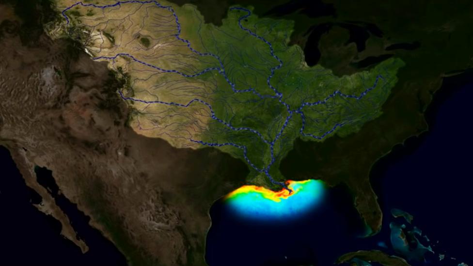 Ilustración que muestra los ríos que descargan en el Golfo de México nutrientes que producen crecimientos explosivos de algas