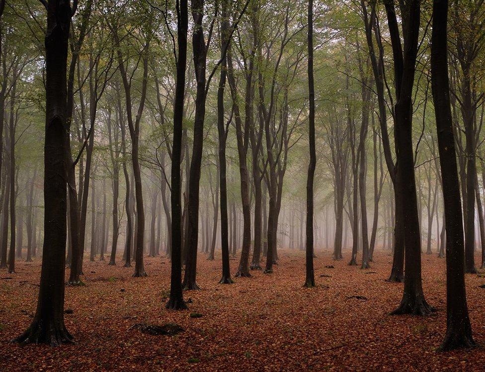 Mist in woodland