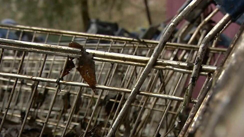 River Stour shopping trolleys 'stopping salmon spawning'