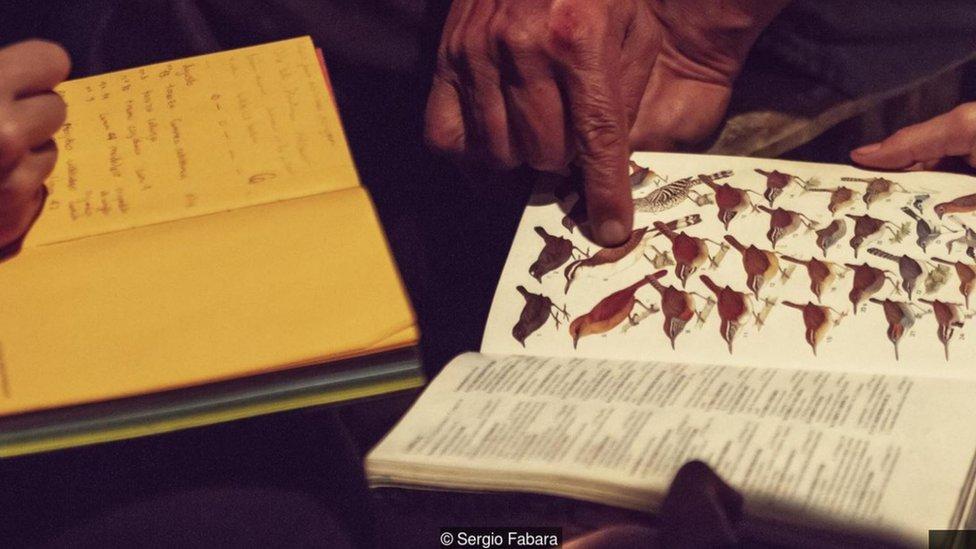 Un libro de pájaros