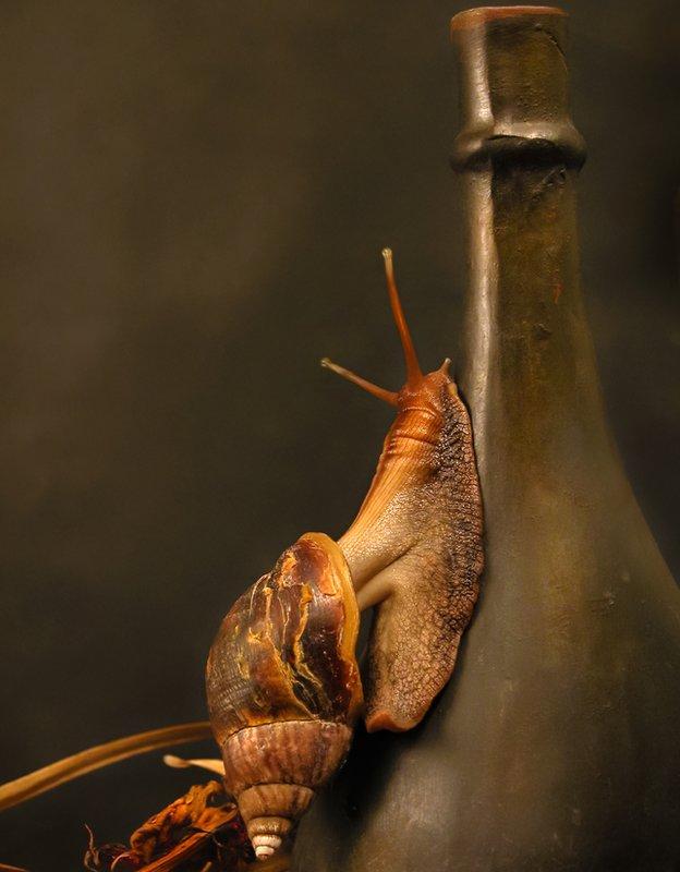 Caracol subiendo por el cuello de una botella