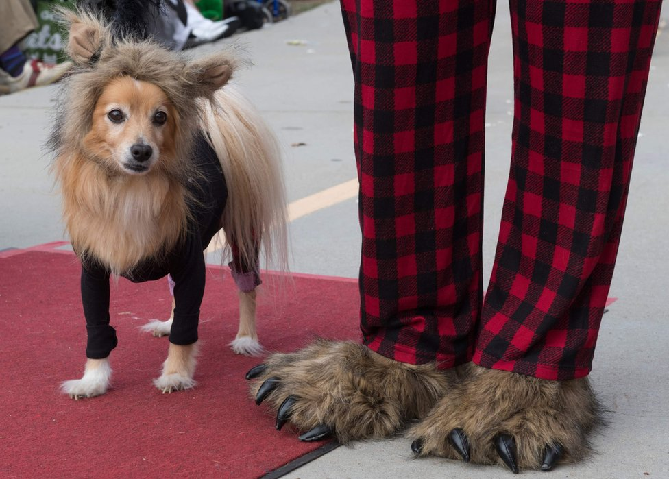 Dogs walk on the red carpet
