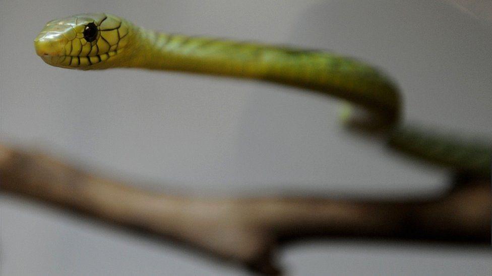 Отруйний втікач: у Празі спіймали змію, яка налякала увесь район