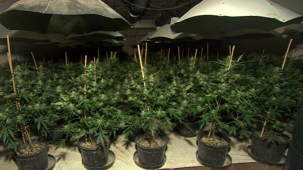 Plantación de cannabis en el interior de un antiguo búnker nuclear de Reino Unido.