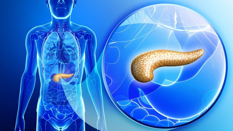 Ilustración del páncreas y su localización en el cuerpo humano