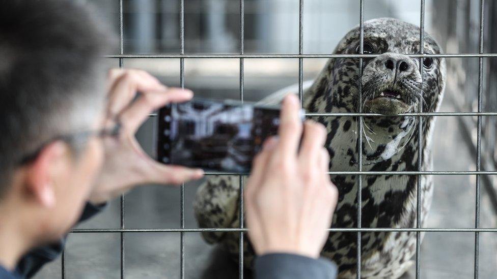 čovek slika foku u kavezu
