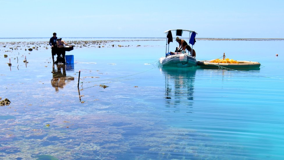 A coral reef in the foreground, two researchers standing in the water, one on an accompanying dinghy.