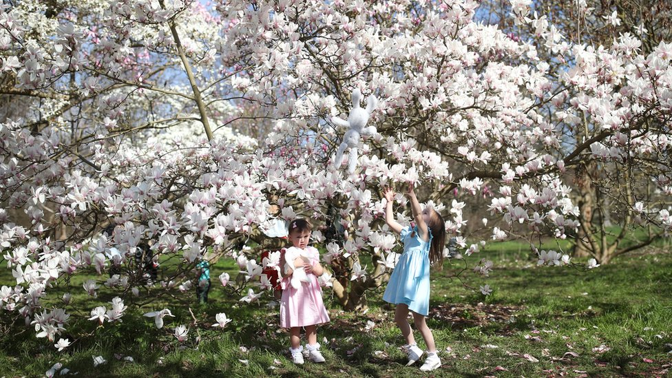 Sisters Mia (left) and Emma Szavejcsuk, aged two and four, play under a magnolia tree at the Royal Botanic Gardens, Kew, in London