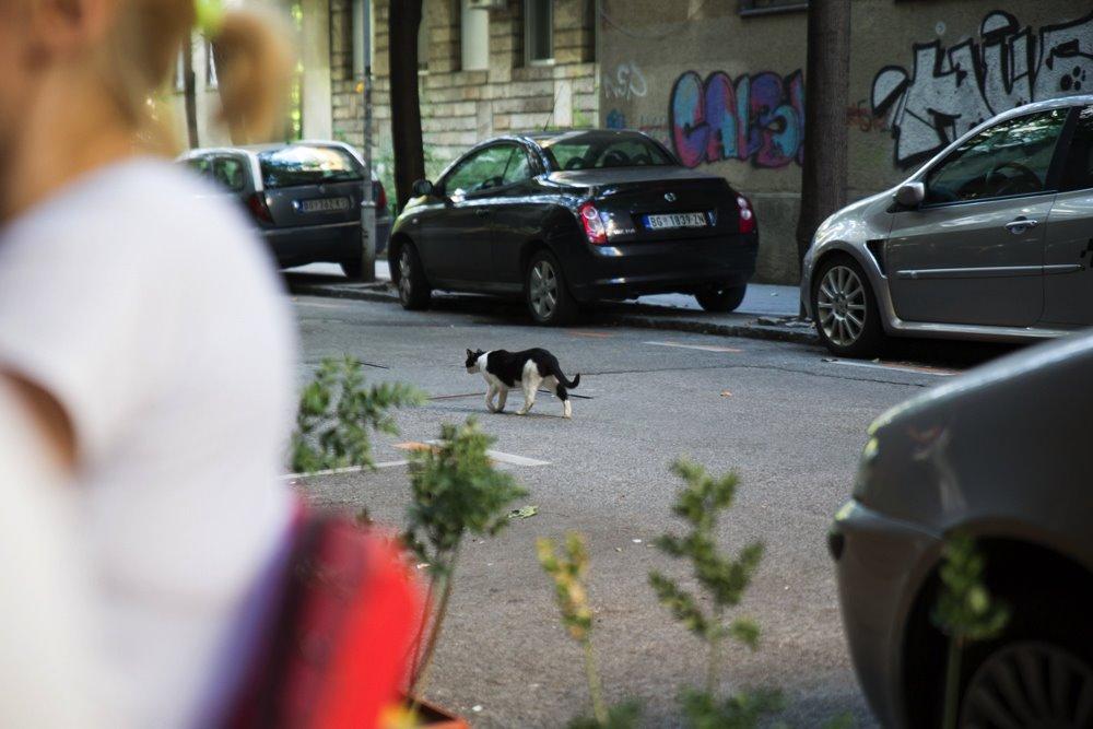 mačka na ulici beograd