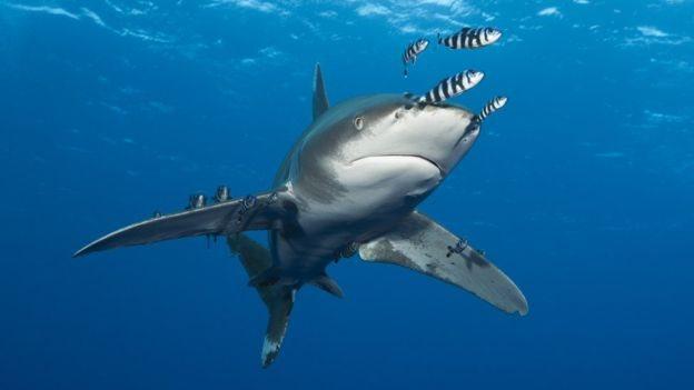 Tiburón y peces en el océano
