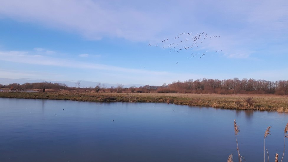 Willington Wetlands