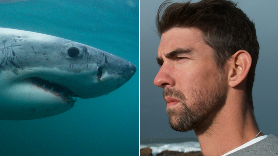 Composite picture of Great White Shark facing Michael Phelps