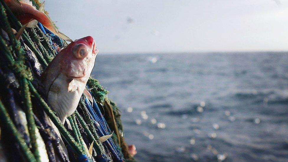 fishing UK