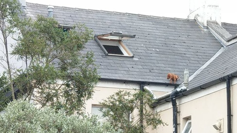 Footage shows puppy being rescued from roof in Plymouth