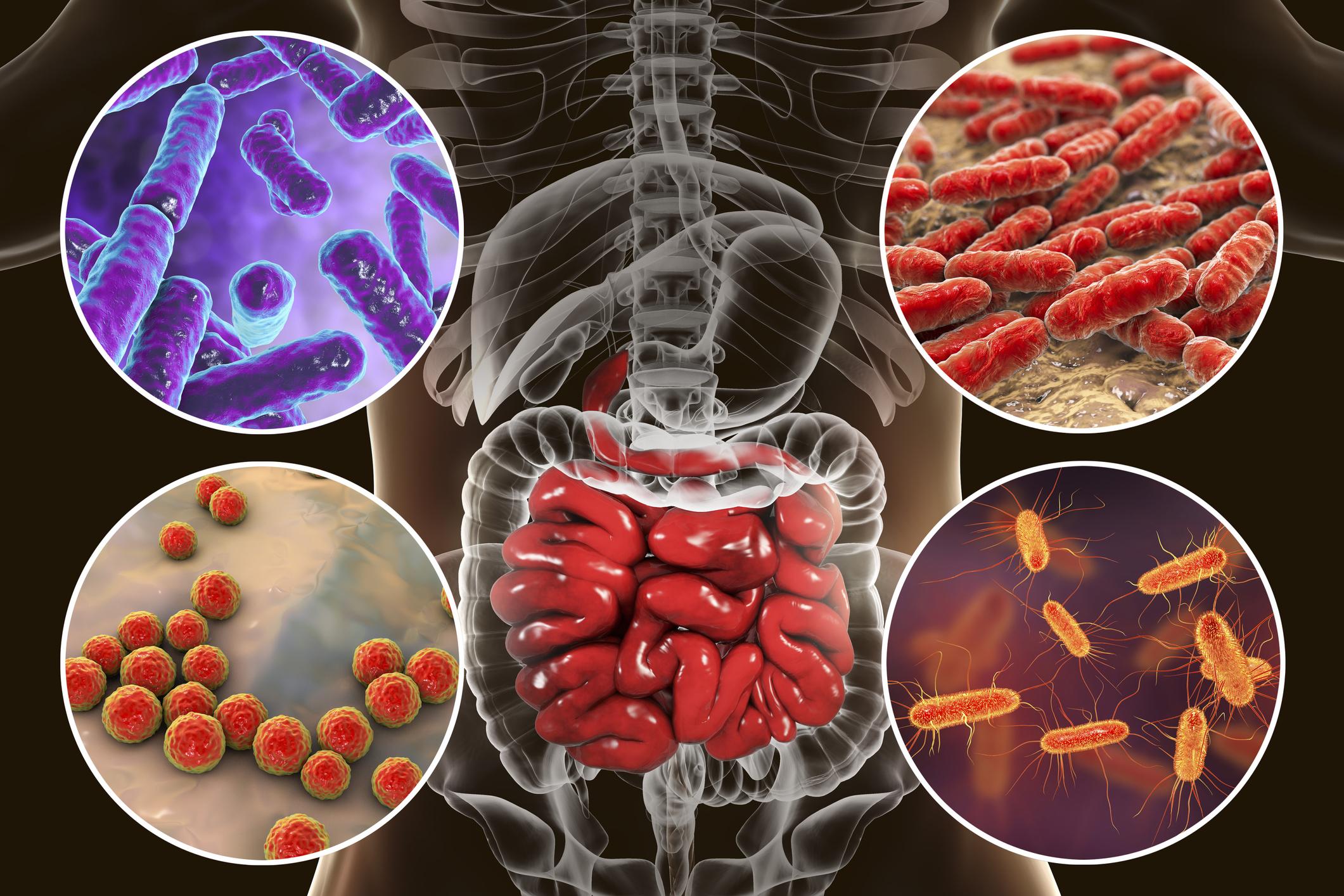 Imagen del intestino y sus bacterias.