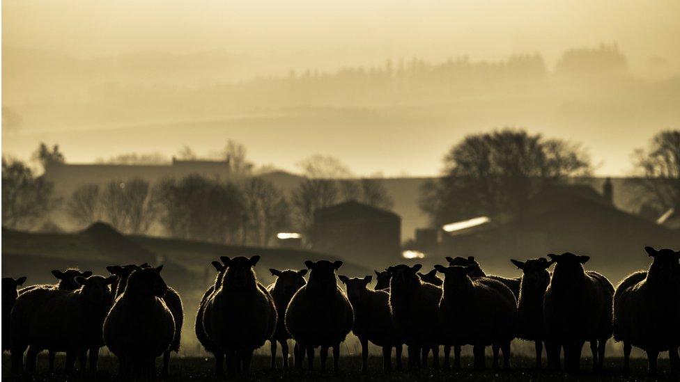 Minister Fergus Ewing seeks farm funding guarantee