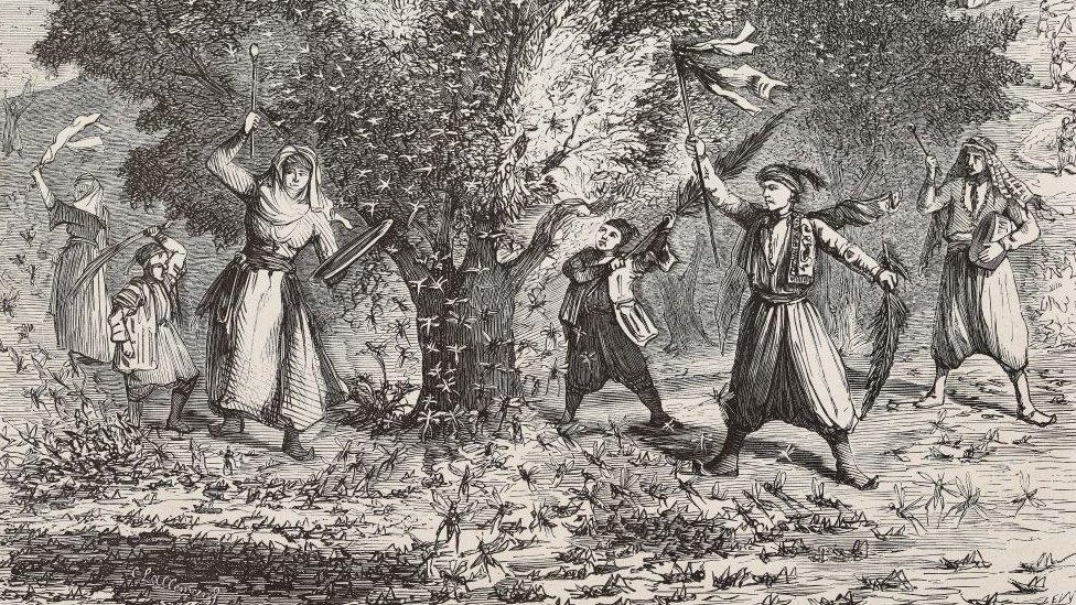 Ilustrasi wabah balalang di Suriah tahun 1865