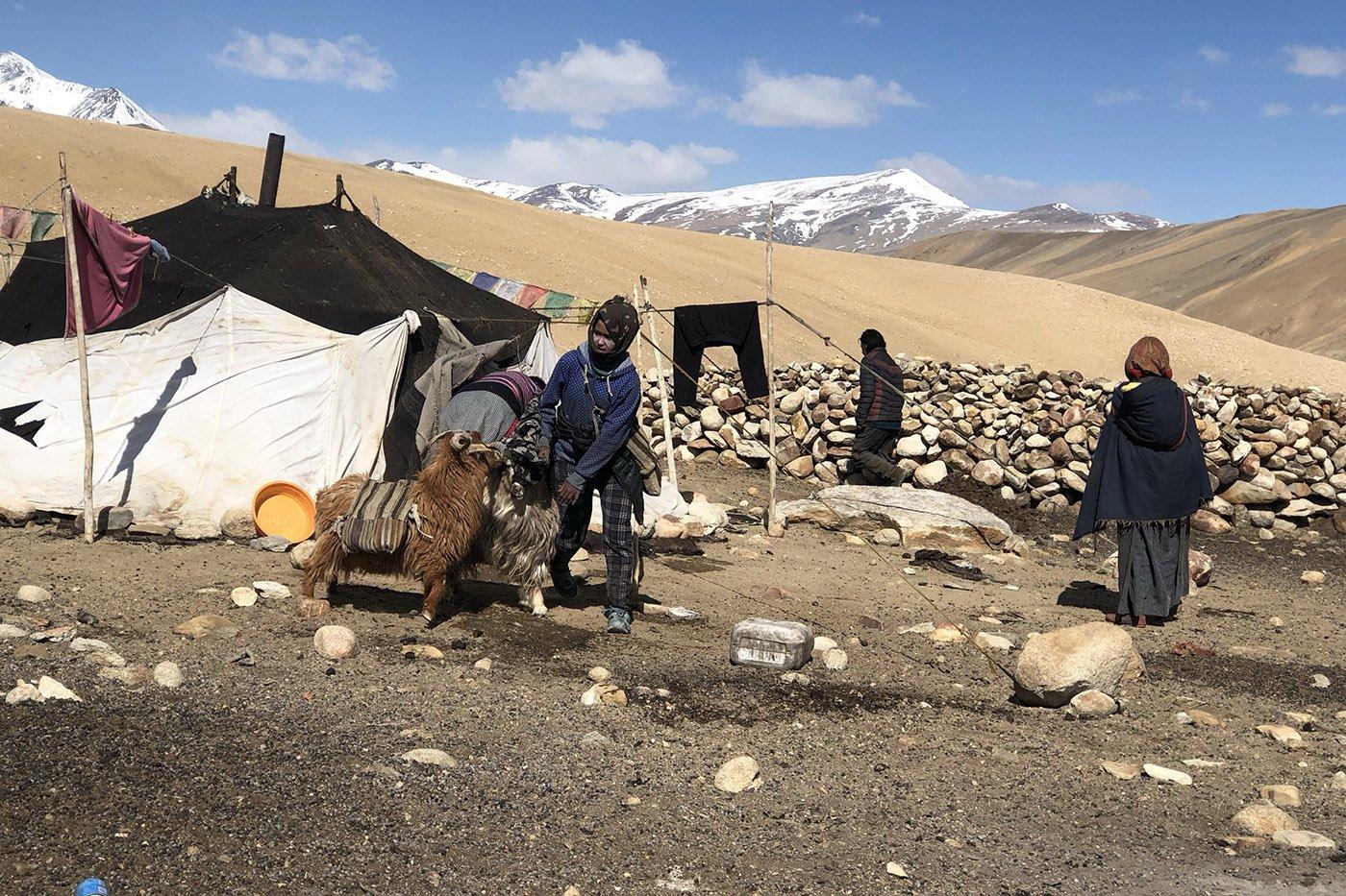 達拉克的居民多是牧民,他們依靠放養牲畜生存。