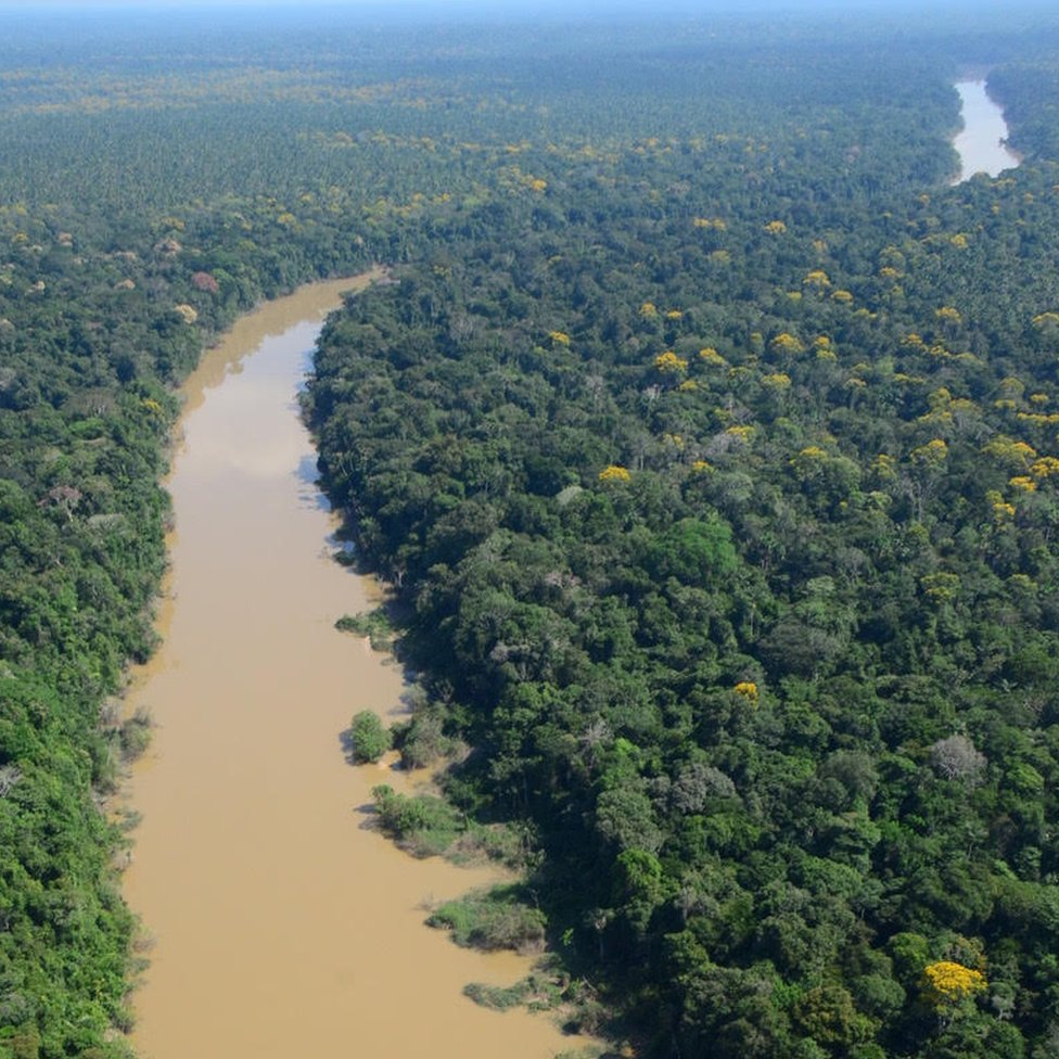 Selva del noreste de Perú.