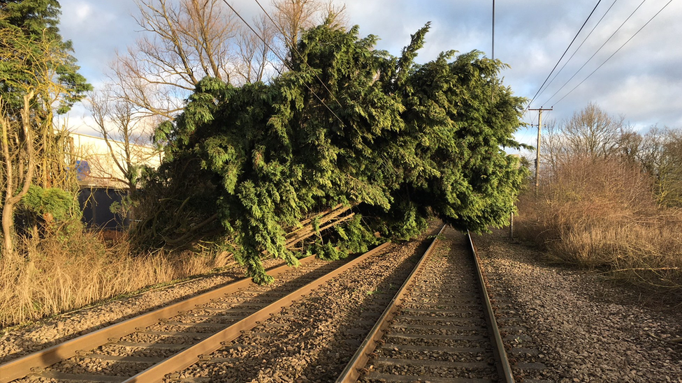 fallen tree blocking railway line