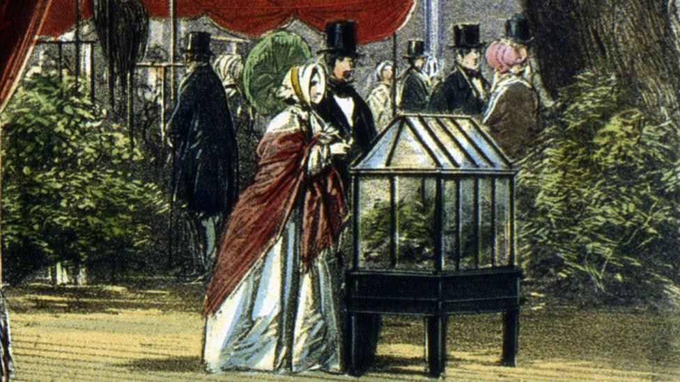 Un hombre y una mujer admiran una caja de Ward en la Gran Exposición, Hyde Park, Londres, 1851.