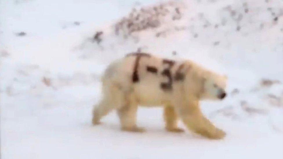 Imagen del oso polar