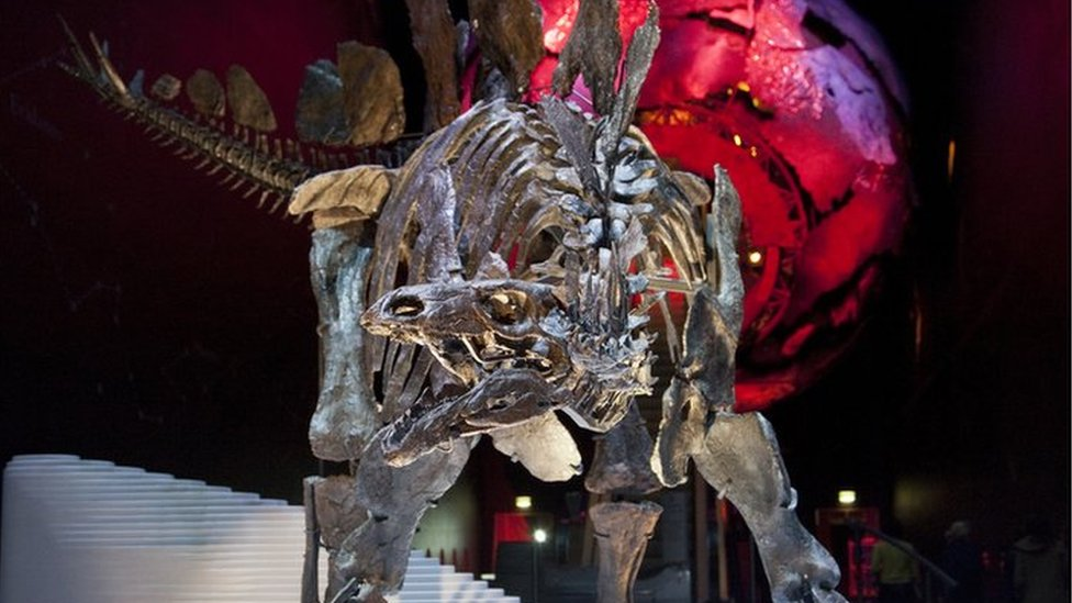 Sophie the Stegosaurus in the Natural History Museum