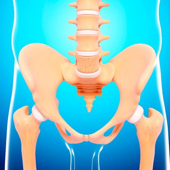Ilustración de huesos de la columna y cadera