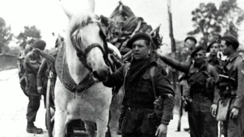 D-Day: A French horse called George was an unlikely hero