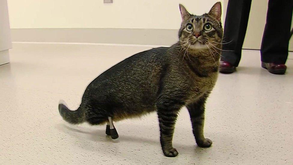 Vincent the cat