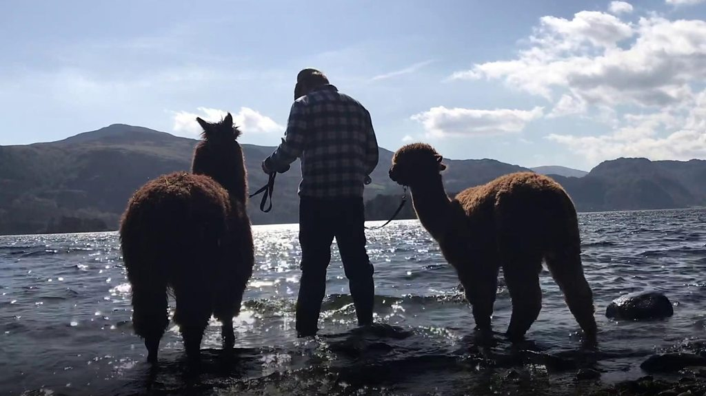 From life in the Army to alpaca farmer