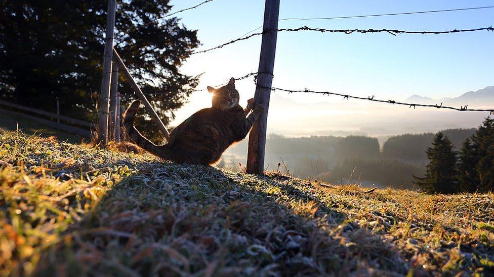 Un gato rasca y se estira en un poste en el campo.