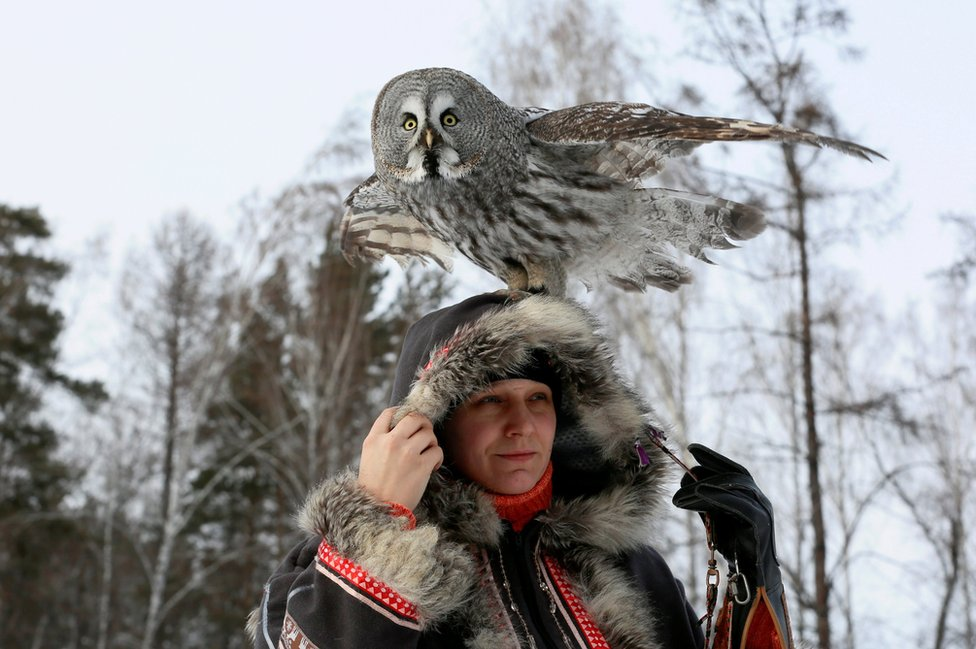 Mykh, a two-year-old Great Gray Owl, sits on the head of ornithologist Daria Koshcheyeva