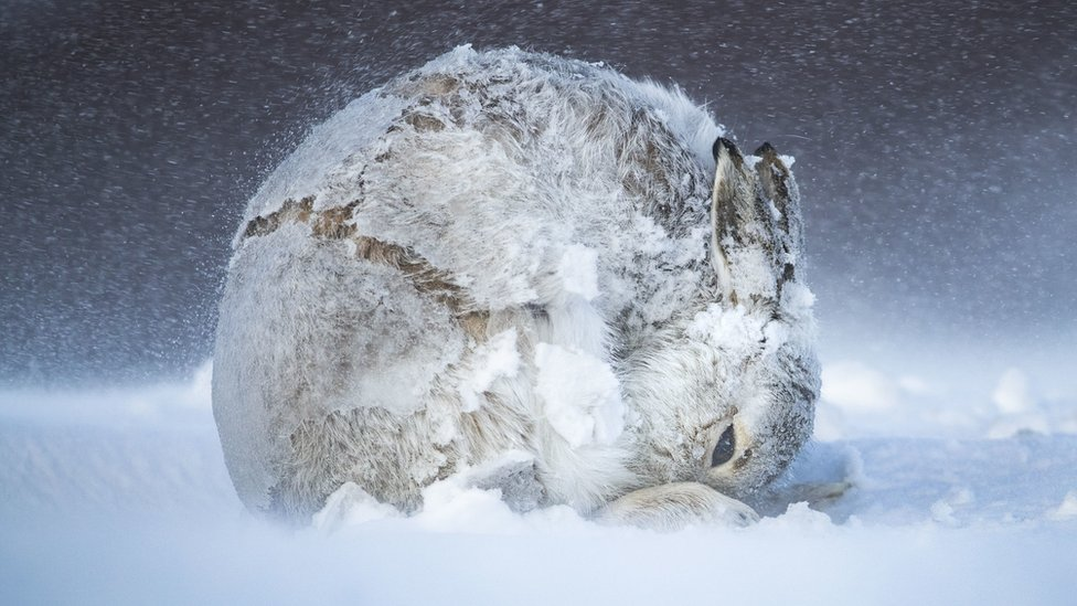 Hare Ball by Andy Parkinson