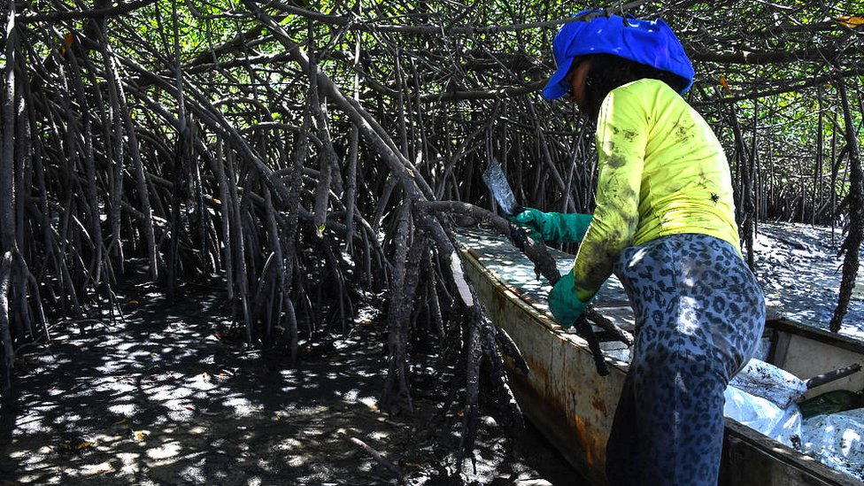 Mangroves in Cabo de Santo Agostinho, Pernambuco state, in Brazil, on October 31, 2019