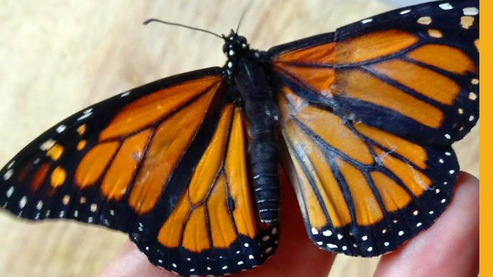 Popravila sam slomljeno krilo leptira u sećanje na majku