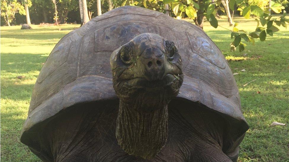 島上大烏龜的數量近年已經回升到百多只。