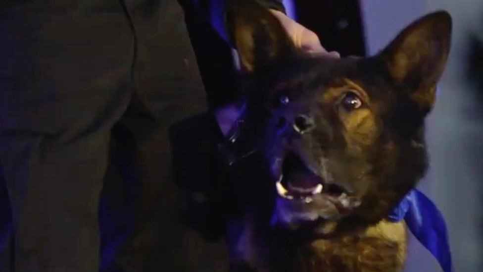 Stabbed Derby police dog Axle collects bravery award