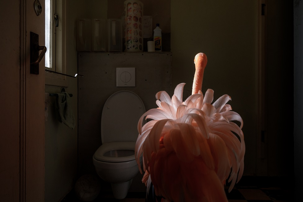 A flamingo stands in a toilet