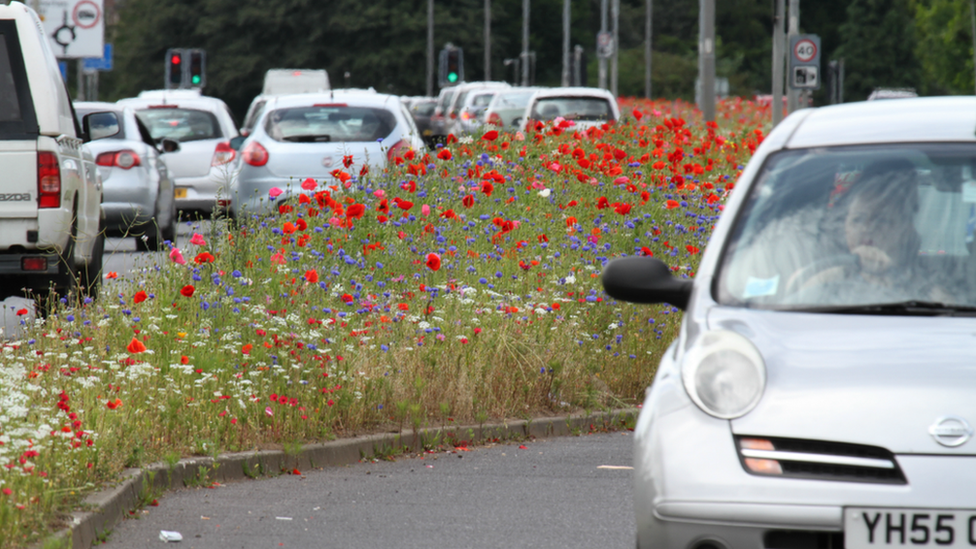 Rotherham roadside meadow